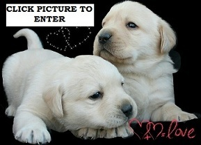 puppies-available